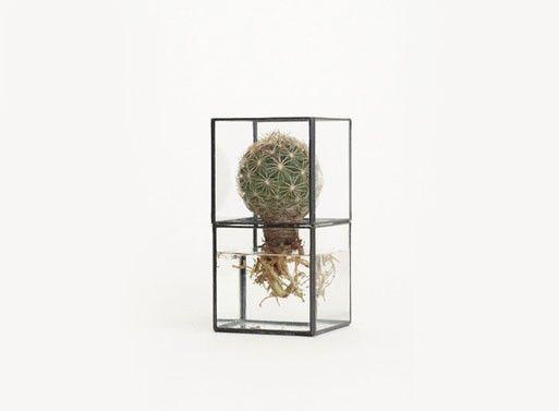 Display Case-Like Planters