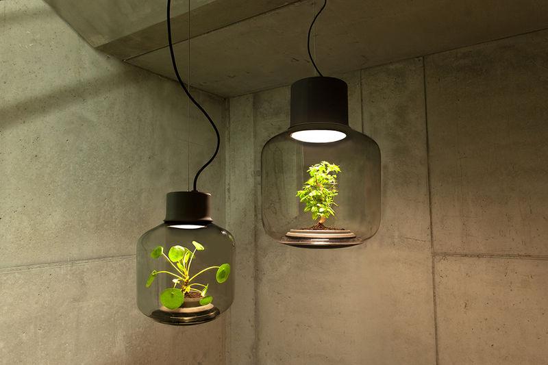 Hanging Terrarium Lamps