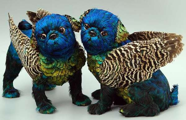 Plumed Pooches