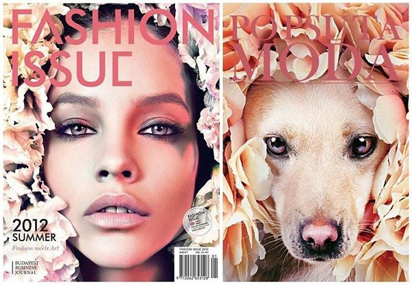 Glamorous Pet Adoption Editorials