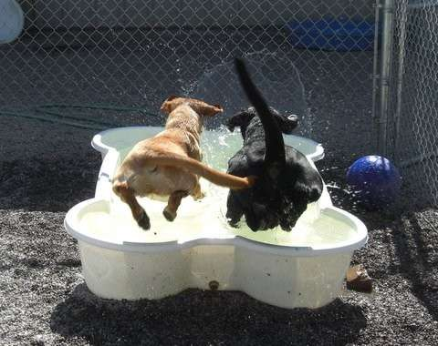 pools-for-dogs-bone-shaped-swimming-pool