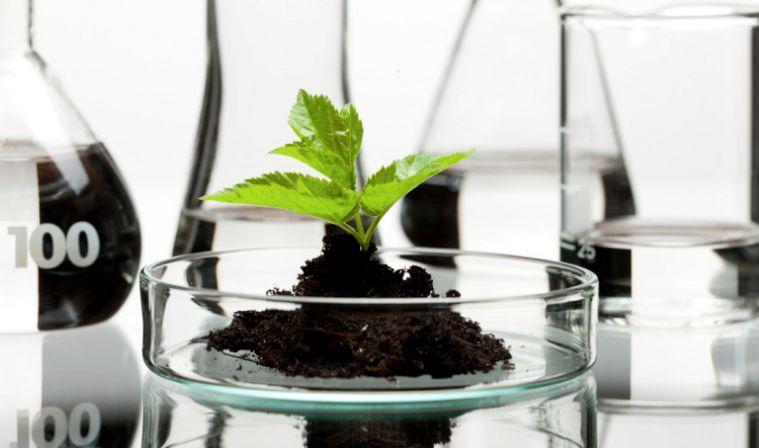 Medical Marijuana Biotech Brands