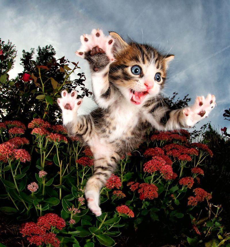 Flying Kitten Photography Books