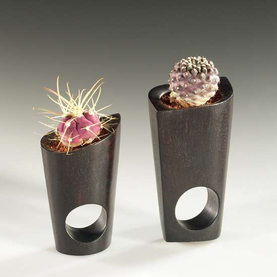 Cactus Rings