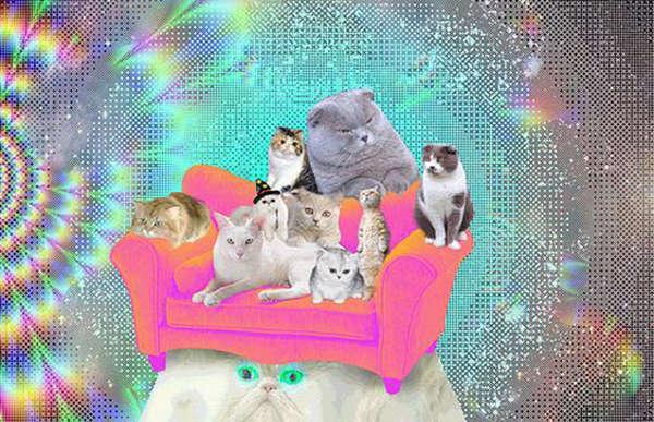 Trippy Tye-Dyed Felines