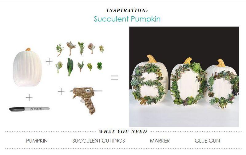 DIY Succulent-Adorned Pumpkins