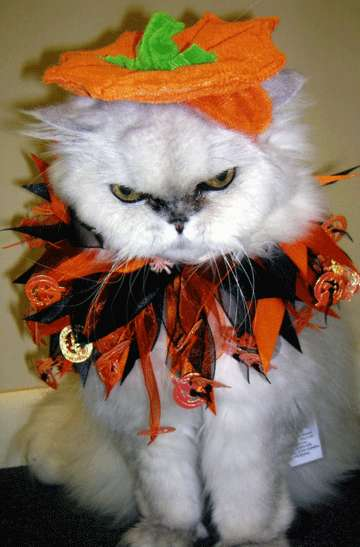 Pets As Pumpkins 10 Jack O Lantern Costumes