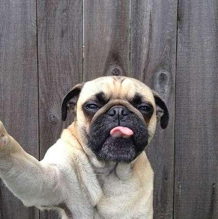 Parodying Pup Self-Portraits