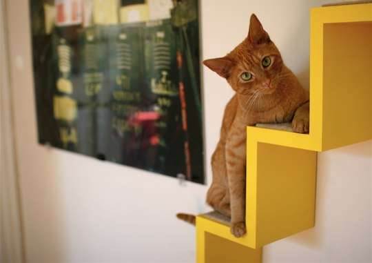 Integrated Feline Furniture