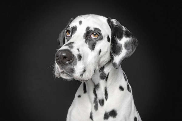 Expressive Animal Portraits
