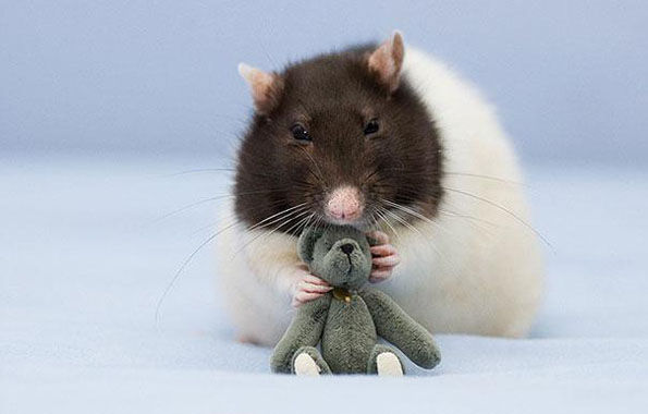 Endearing Rodent Photos