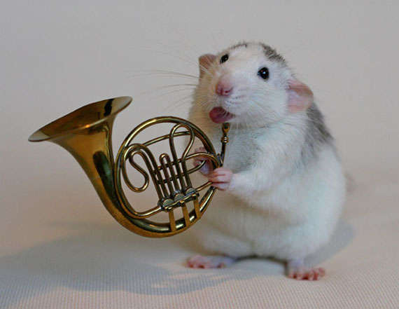 Musical Rodent Depictions