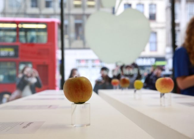 Literal Apple Stores