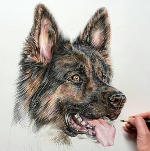 Photoreal Pet Sketches