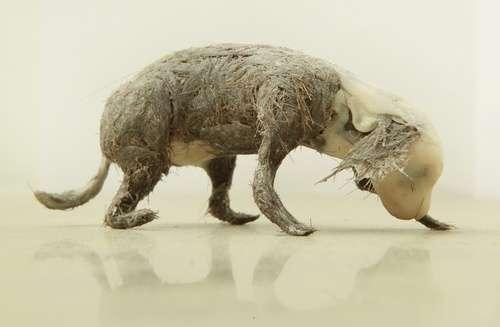 Gum Sculptures