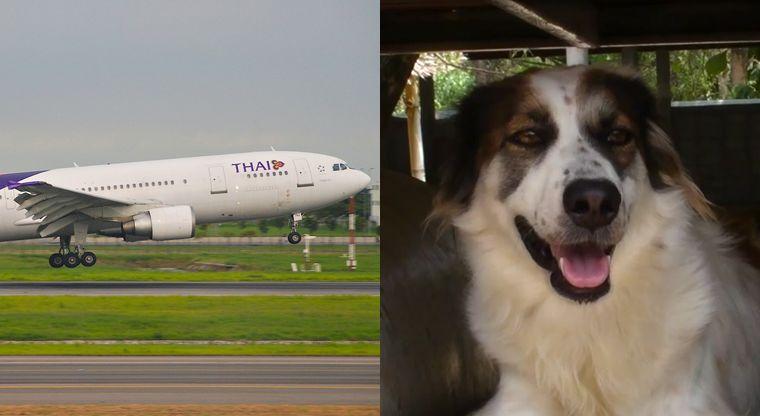 Airplane Animal Adoption Services