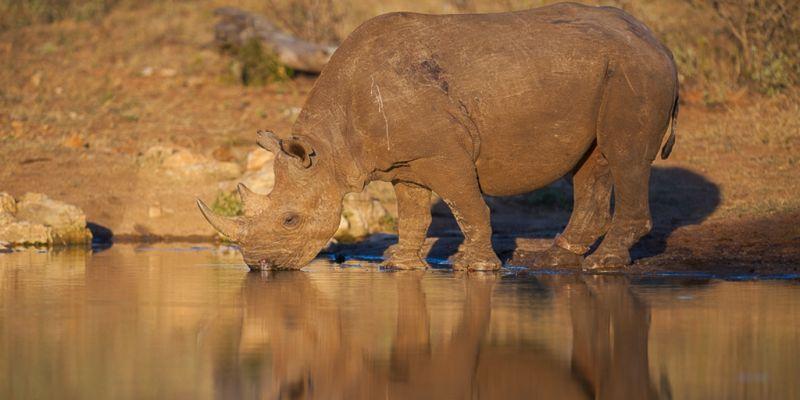 Anti-Poaching Beers