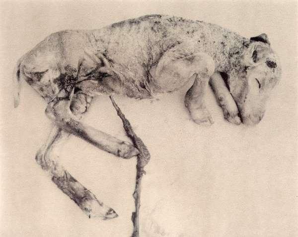 Morbid Mammal Captures