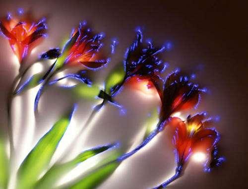 Electrocuted Flowers