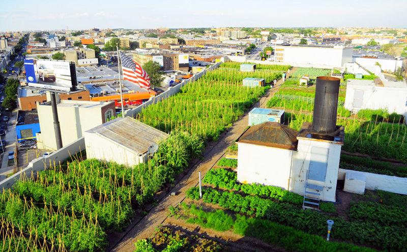 Urbanized Rooftop Farms