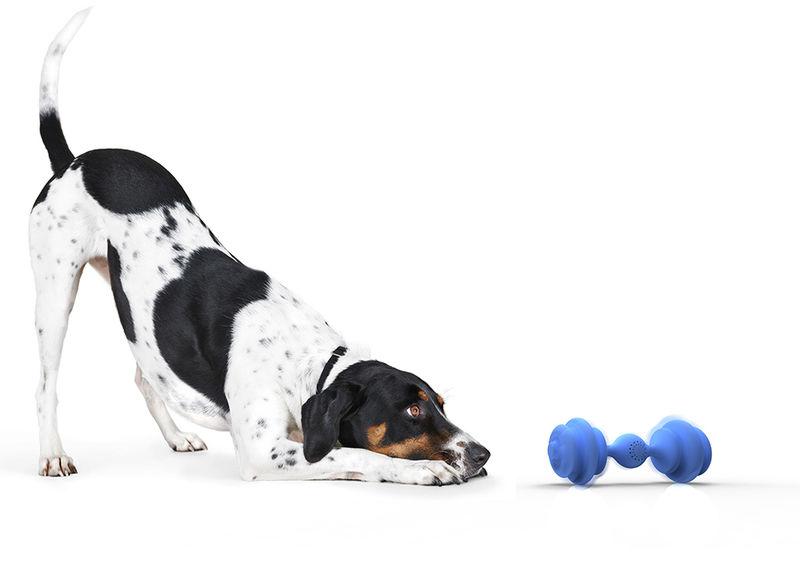 Communicative Dog Toys