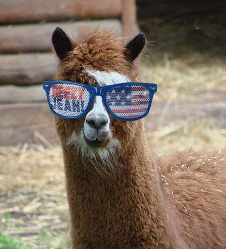 Olympic Sunglass-Wearing Animals