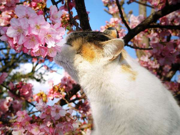 Feline Flower Photo Shoots