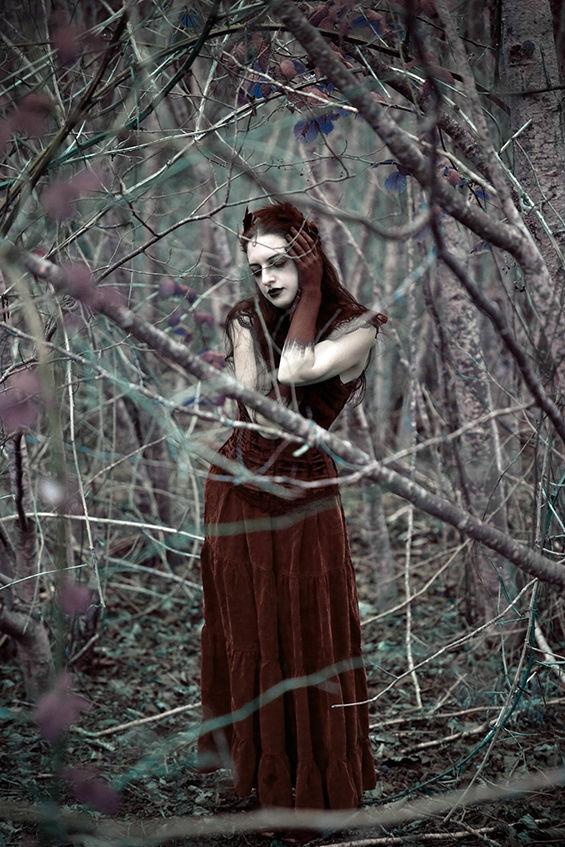 Haunting Woodland Photography
