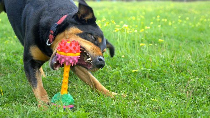 Modular Dog Toys