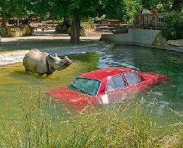 Extreme Zoo Awareness Stunts