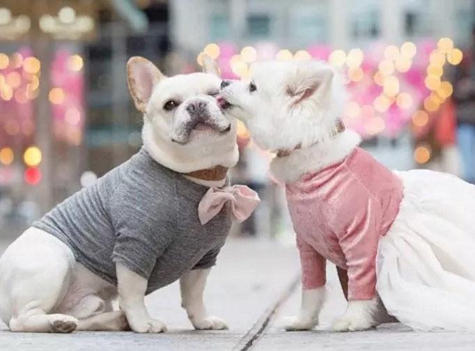 Puppy Proposal Photoshoots