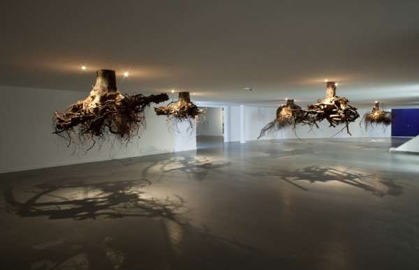 Suspended Tree Root Installations