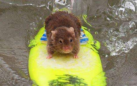 Surfing Mice