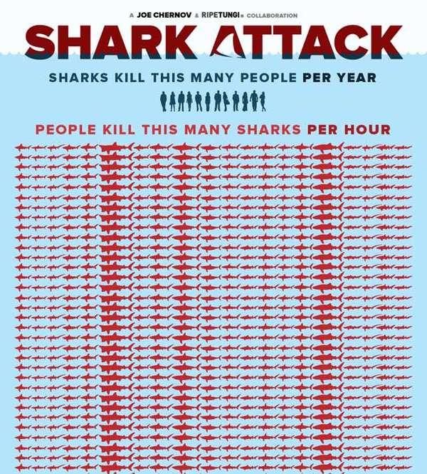 Eye-Opening Shark Inforgraps