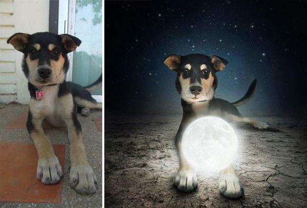 Mystical Canine Photoshoots