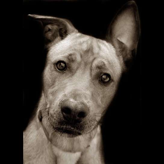 Heart-Wrenching Canine Portraits
