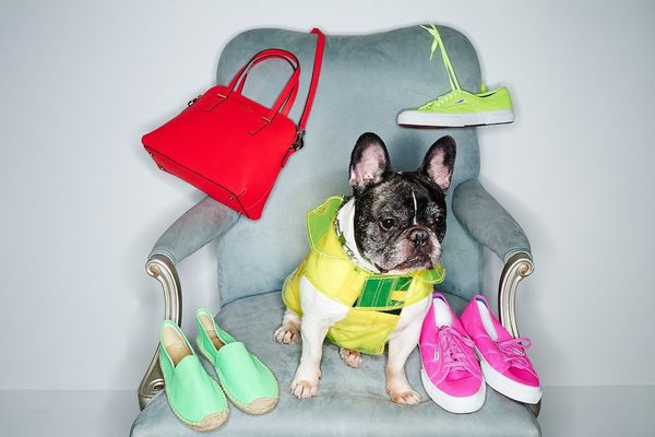 Fashionable Dog Lookbooks