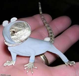 Animal Pin-Ups