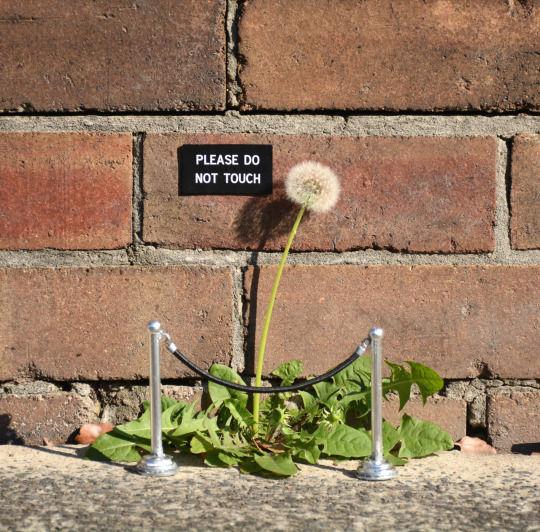 Humorous Sign Art
