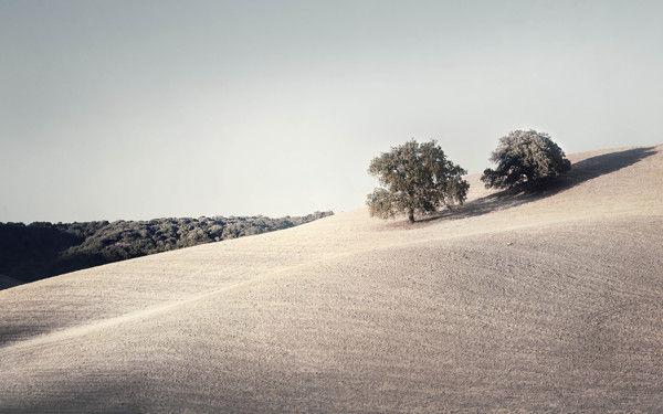 Quiet Landscape Photography