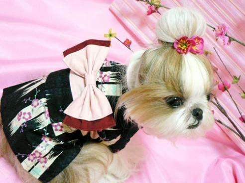 Geisha Dogs