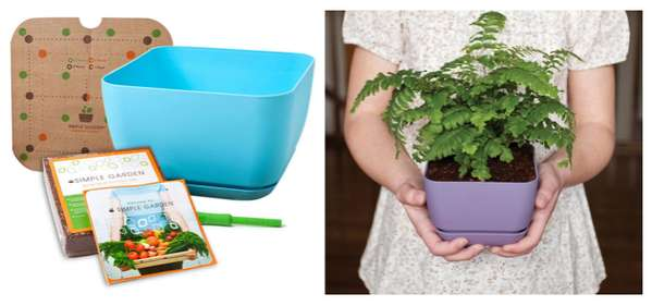 Foolproof Plant Sets