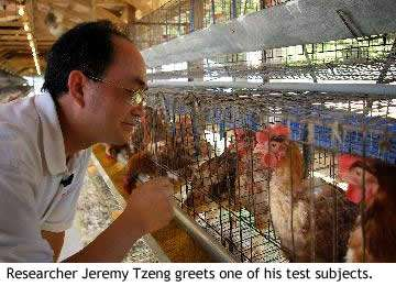 Chicken Feed To Replace Drugs