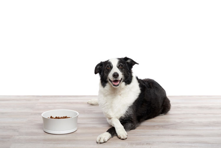 Weight-Tracking Pet Bowls