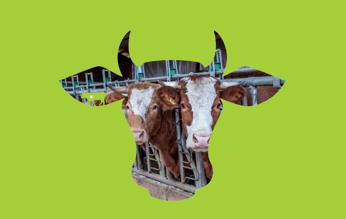 Cow-Monitoring Stomach Implants