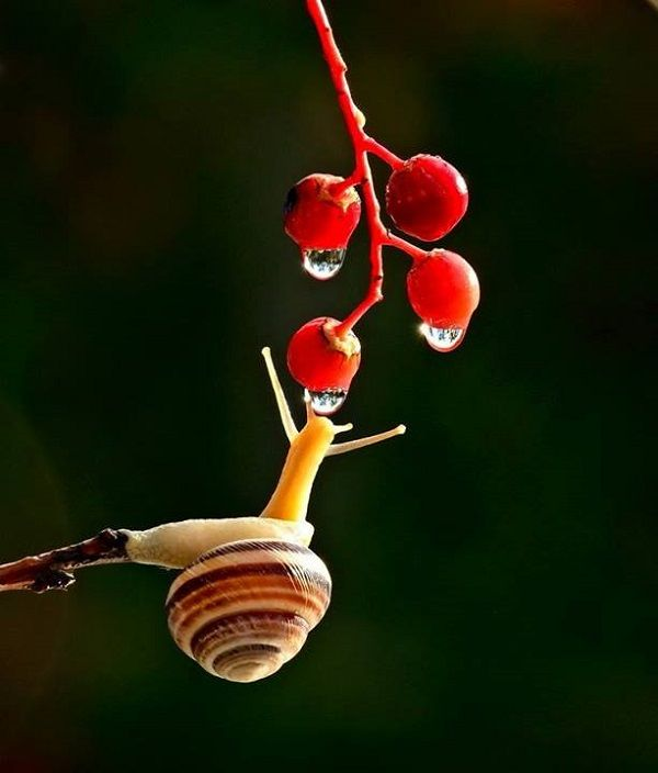 Macro Snail Photography