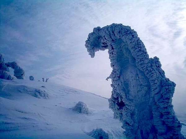 snow monsters of japan