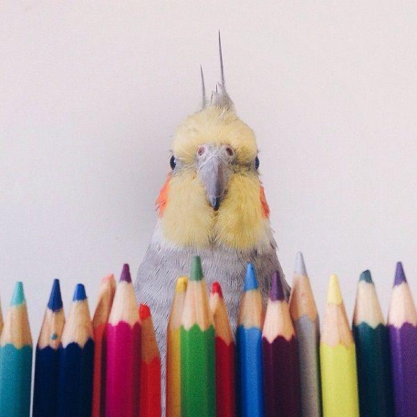 Social Media Bird Celebrities