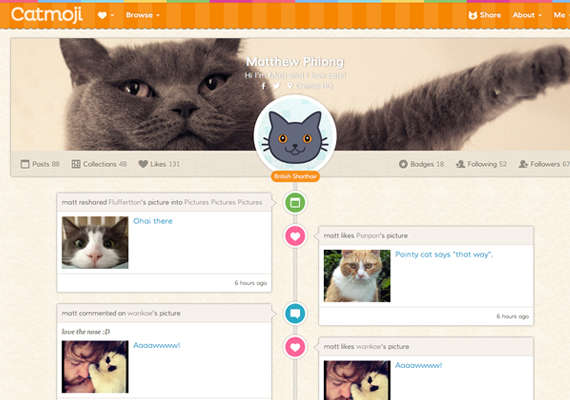 Social Networking for Cat Lovers 