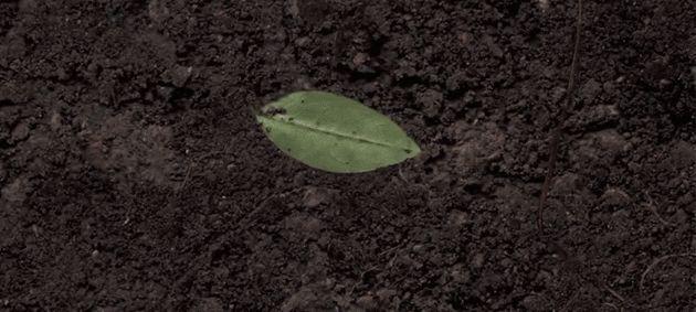 Soil-Watching Cameras